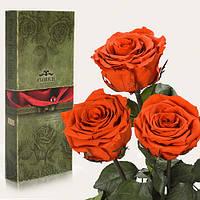 Три долгосвежих розы Florich в подарочной упаковке  - ОГНЕННЫЙ ЯНТАРЬ (7 карат на среднем стебле)