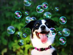 Мыльные супер-пузыри