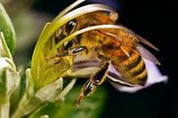 Гнезда пчел в зимне-весенний период