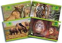 Альбом для рисования Animal Planet AP16-241