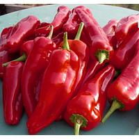 Семена перца сладкого Рубинова 50 грамм Moravoseed