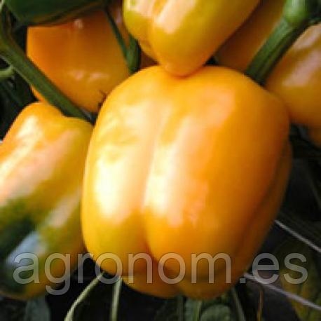 Семена перца сладкого Мистери 50 грамм Moravoseed