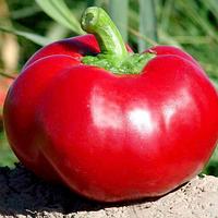 Семена перца сладкого Александр 50 грамм Moravoseed