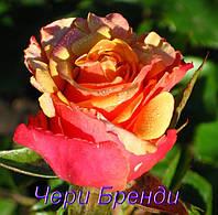 Роза Чери Бренди