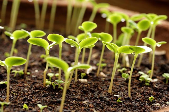 Купить весовые семена оптом от производителя