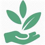 Сидерати - доступне та ефективне біо-добриво