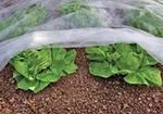 Агроволокно Greentex белое 30 г/м2 - 4,2х100 м, фото 6