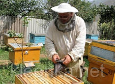 Пленка полиэтиленовая серая для пчеловодства в ульях на метраж и в рулонах, 3 м ширина, 100 мкм