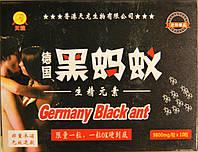Немецкий Черный Муравей, фото 1
