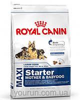 Royal Canin MAXI STARTER - первый твердый корм для щенков крупных пород 1кг