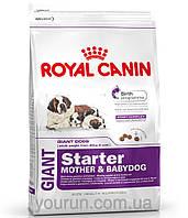 Royal Canin GIANT STARTER - первый твердый корм для щенков гигантских пород 4кг