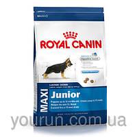 Royal Canin MAXI JUNIOR корм для щенков в возрасте от 2 до 15 месяцев 4кг