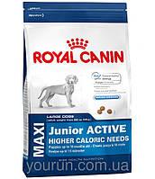 Royal Canin MAXI JUNIOR ACTIVE - корм для щенков крупных пород с высокими энергетическими потребностями 4кг