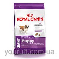 Royal Canin GIANT PUPPY корм для щенков от 2 до 8 месяцев 4кг