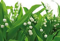 Фотообои бумажные на стену 368х254 см 8 листов: Цветы ландыши. Komar 8-517