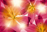 Фотообои бумажные на стену 368х254 см 8 листов: Цветы в солнечных лучах. Komar 8-928