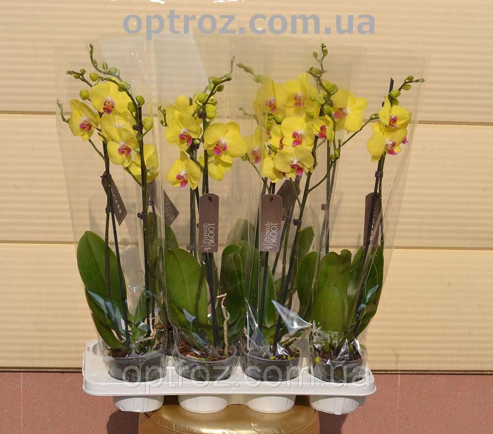 Орхидея фото цвета
