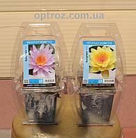 Лотос Нимфея водяные растения
