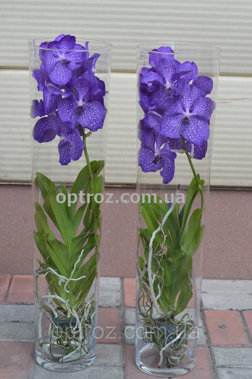 8fecf7f62 Орхидея Ванда в стеклянной вазе высота 80 см опт и розница - OPTROZ Оптовая  база цветов