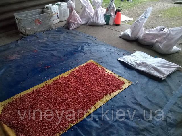Нано минералис для обработки семян кукурузы, подсолнечника, пшеницы, ячменя, сои с инокулянтом
