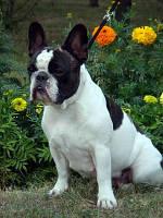 Поводок-рулетка для собак весом до 25кг