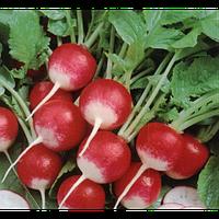 Семена редиса Полонеза 1 кг Moravoseed