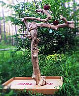 Стенд присада для попугая (Jawa)