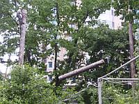 Спиливание деревьев Обрезка веток Удаление пней