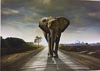 Фотообои, природа, слон,  ПРЕСТИЖ №28 размер 272смХ196см