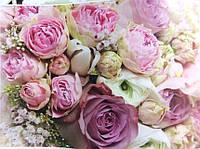 Фотообои, розы, розовый, светлый,  ПРЕСТИЖ №20 размер 272смХ196см