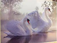 Фотообои, озеро, лебеди, природа,  ПРЕСТИЖ №27 размер 272смХ196см