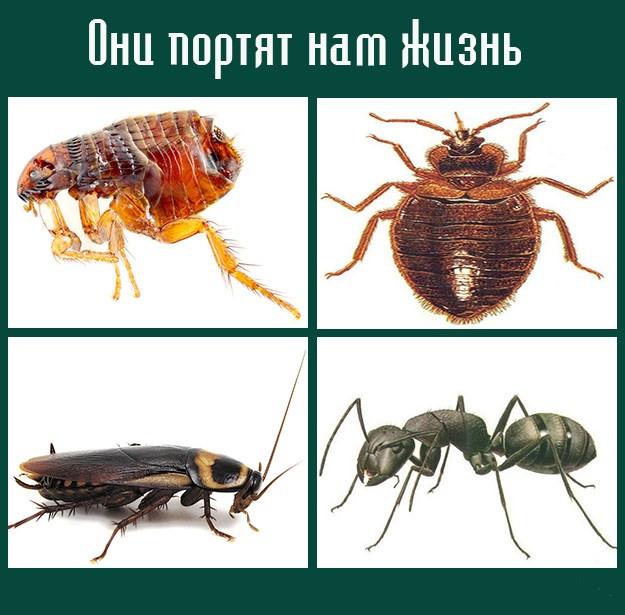 Регент От Колорадского Жука Инструкция По Применению