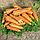КАНТЕРБЮРИ F1 - семена моркови Шантане (1,6-1,8 мм) PR, 1 000 000 семян, Bejo Zaden, фото 2