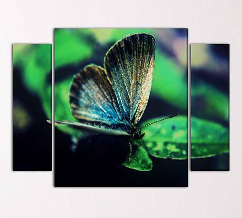 """Модульная картина """"Бабочка"""", фото 2"""