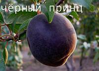 Саженец, саженцы плодовых деревьев абрикос, абрикосы: Чёрный принц