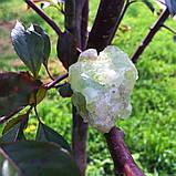 Датолит-кристалл., фото 6