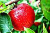 Яблочный пектин, НАУЧНЫЕ ИССЛЕДОВАНИЯ