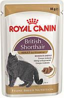 Royal Canin British Shorthair (кусочки в соусе) Консервированный корм для взрослых кошек