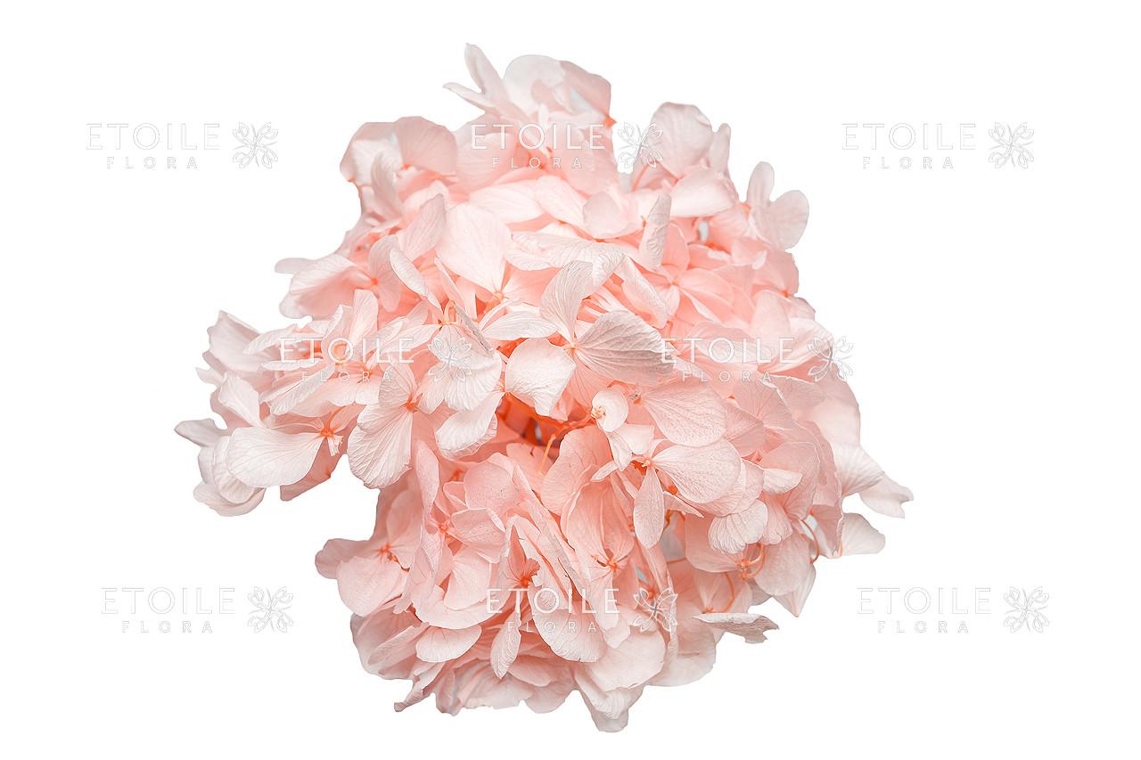 Гортензия Премиум (розовый в коробке) - ETOILE FLORA Стабилизированные цветы и растения в Харькове
