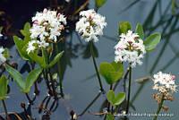 Околоводные растения