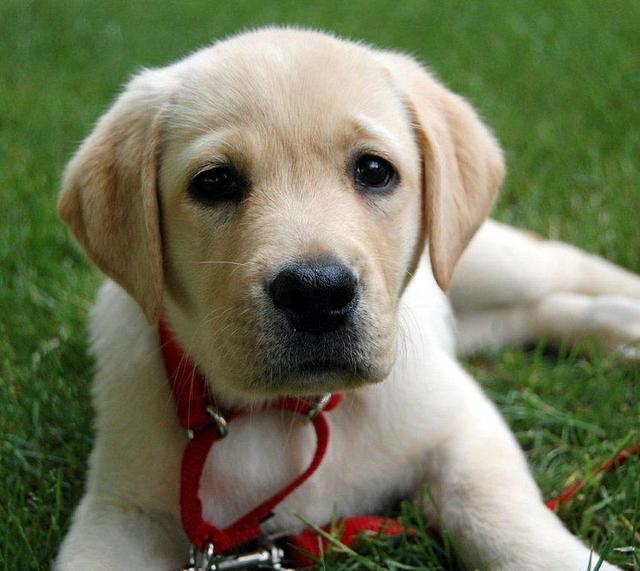 Корм для щенков Purina Dog Chow Puppy Chicken & Rice