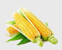 Советы агронома по яровым зерновым культурам