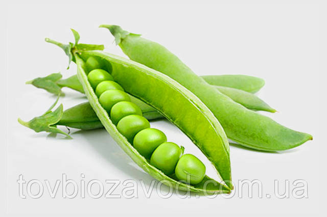 Советы агронома по бобовым культурам