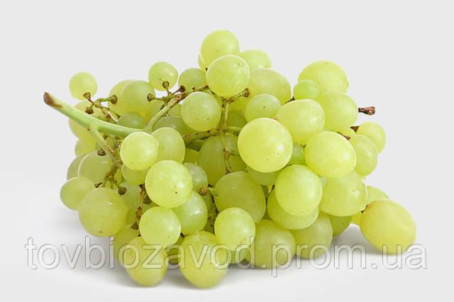 Советы агронома по винограду