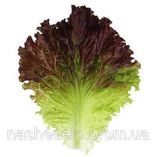 Семена салата КС (KS) 155 F1 5 гр. салат Китано