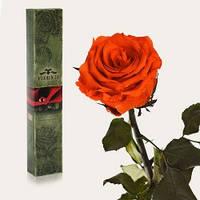 Долгосвежая живая роза Florich в подарочной упаковке  - ОГНЕННЫЙ ЯНТАРЬ (7 карат на коротком стебле)