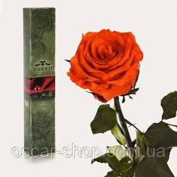 Долгосвежая живая роза Florich в подарочной упаковке  - ОГНЕННЫЙ ЯНТАРЬ (7 карат на среднем стебле)