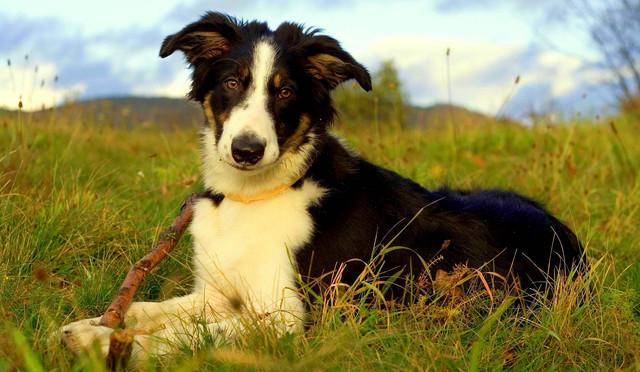 Корм для собак средних пород Brit Premium Adult Lamb and Rice