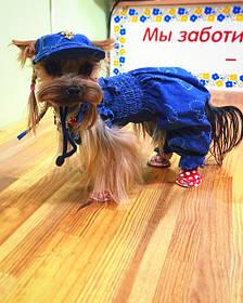 Dress dog-головні убори для собак