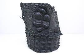 Спинний гребінь сіамської крокодила